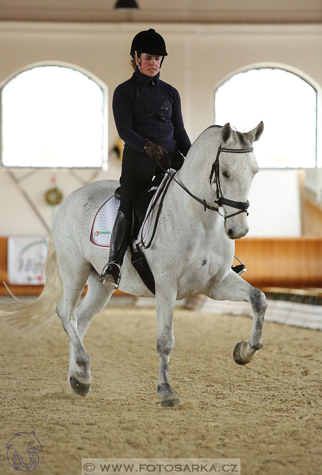 International Equestrian Congress - Horse in...